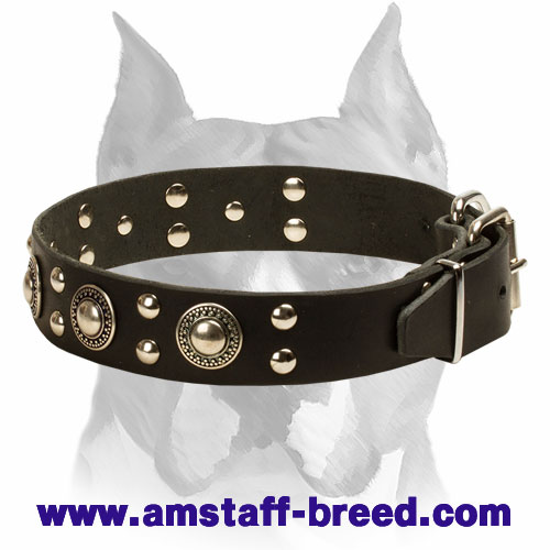 'Rock n Roll' Leather Amstaff Collar - Cool Mix of Decorations - Click Image to Close