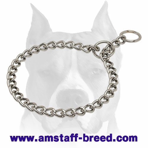 Amstaff Choke Collar Plated with Chrome