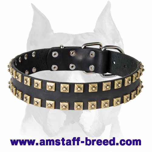 Amstaff Leather Dog Collar Decorated with Brass-Plated Dotted Studs