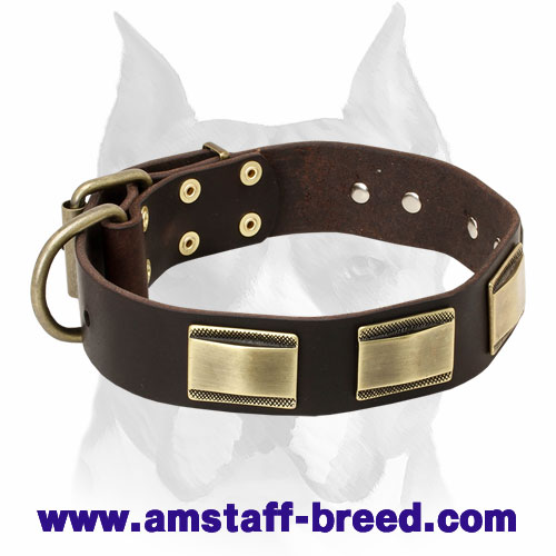 """Vogue Mania"" Amstaff Vintage Style Leather Collar with Brass Plates"