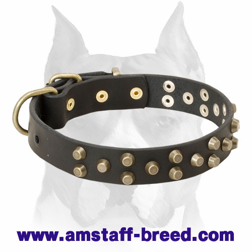Amstaff Pure Leather Dog Collar with Brass-Plated Decorations and Buckle