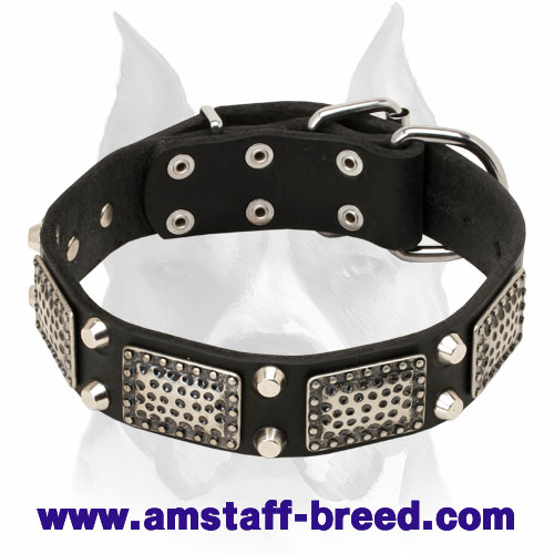 Amstaff Leather Dog Collar with Massive Nickel Fittings and Decorations