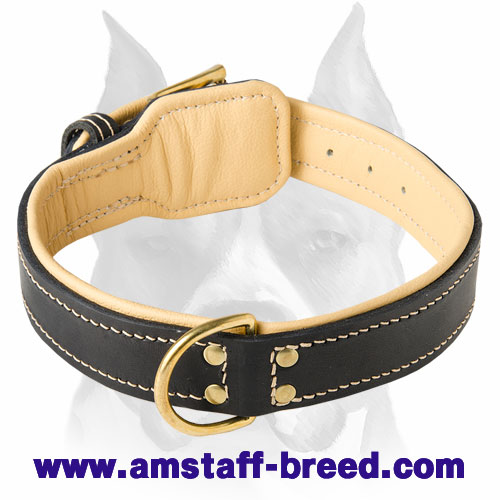 Amstaff Royal Nappa-Padded Leather Dog Collar