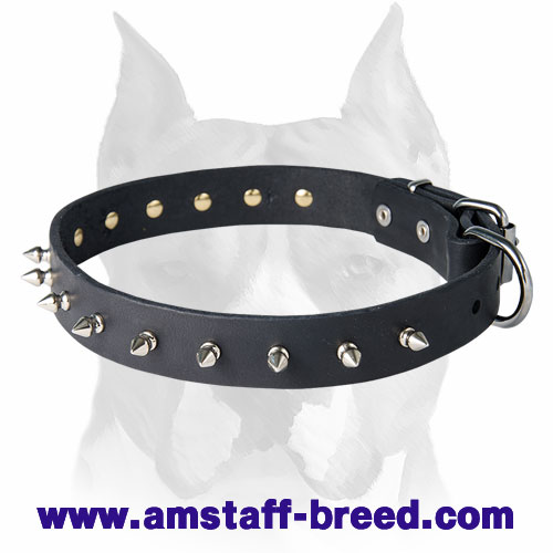 Amstaff Leather Dog Collar Decorated with 1 Row of Spikes