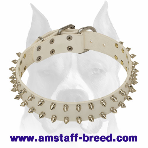 Amstaff Spiked White Leather Dog Collar with Buckle