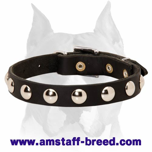Amstaff Leather Dog Collar with Half-Ball Studs