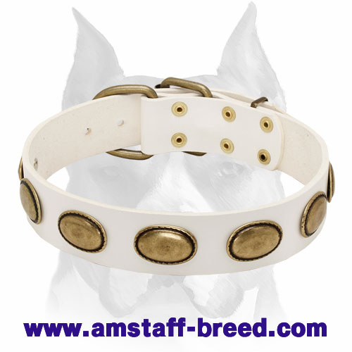Amstaff Elegant Vintage Style Leather Dog Collar with Brass Plates