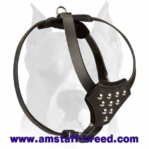 Adjustable Leather Dog Harness with Half-Ball Studs for Amstaff Puppies