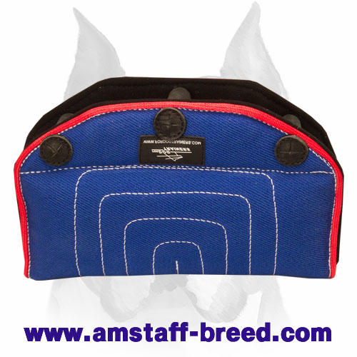 Amstaff French Linen Puppy and Young Dog Bite Builder