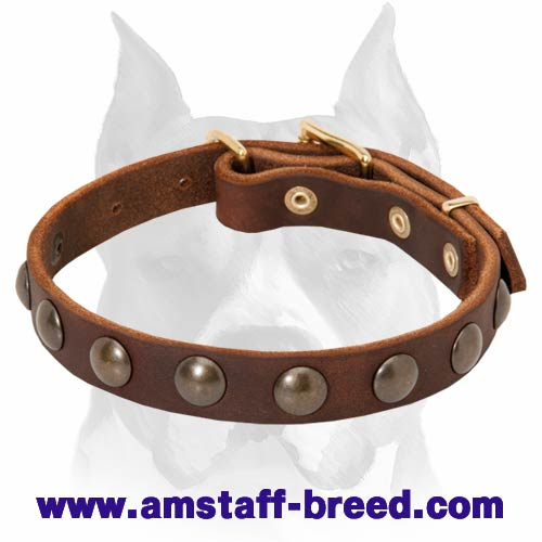 Amstaff Puppy Leather Dog Collar with 1 Row of Half-Ball Studs