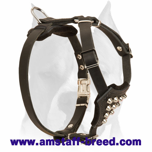 Amstaff Puppies Stylish Leather Dog Harness with Studs
