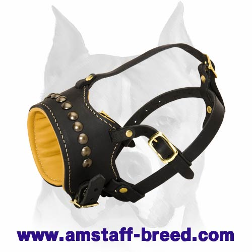 Trendy Nappa Leather Padded Muzzle with Studs for Amstaff