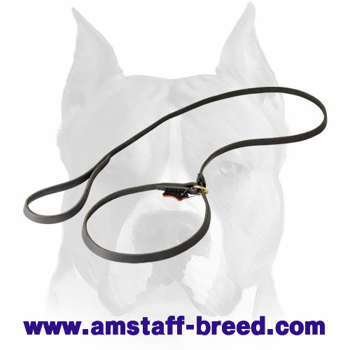 Amstaff combo leather dog leash and choke collar for walking and obedience training