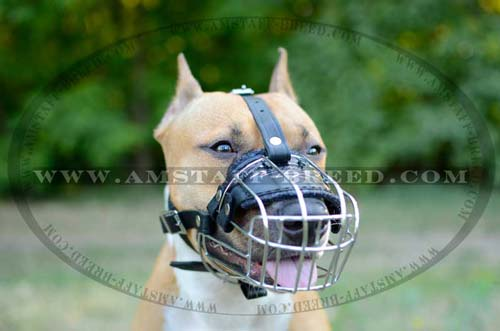 Comfortable basket dog muzzle for Amstaff