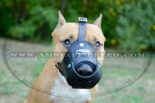Comfortable leather dog muzzle for Amstaff