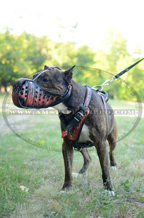Extra strong leather Amstaff painted dog muzzle