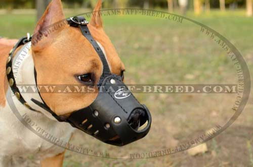 Amstaff breed leather dog muzzle for walking