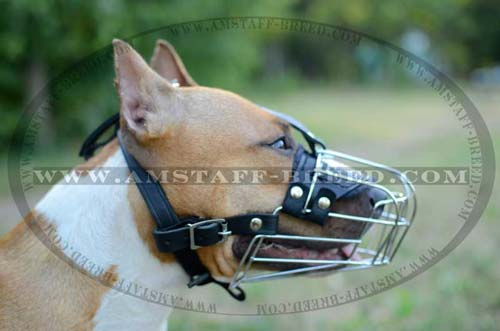 Handcrafted Amstaff metal dog muzzle for comfortable walking