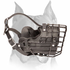 Leather metal cage walking and training muzzle for Amstaff