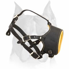 Comfy Buckled Leather Muzzle for American Staffordshire