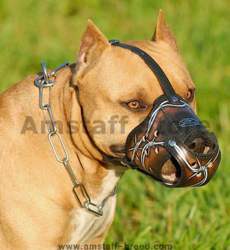 Best designer leather dog muzzle for amstaff